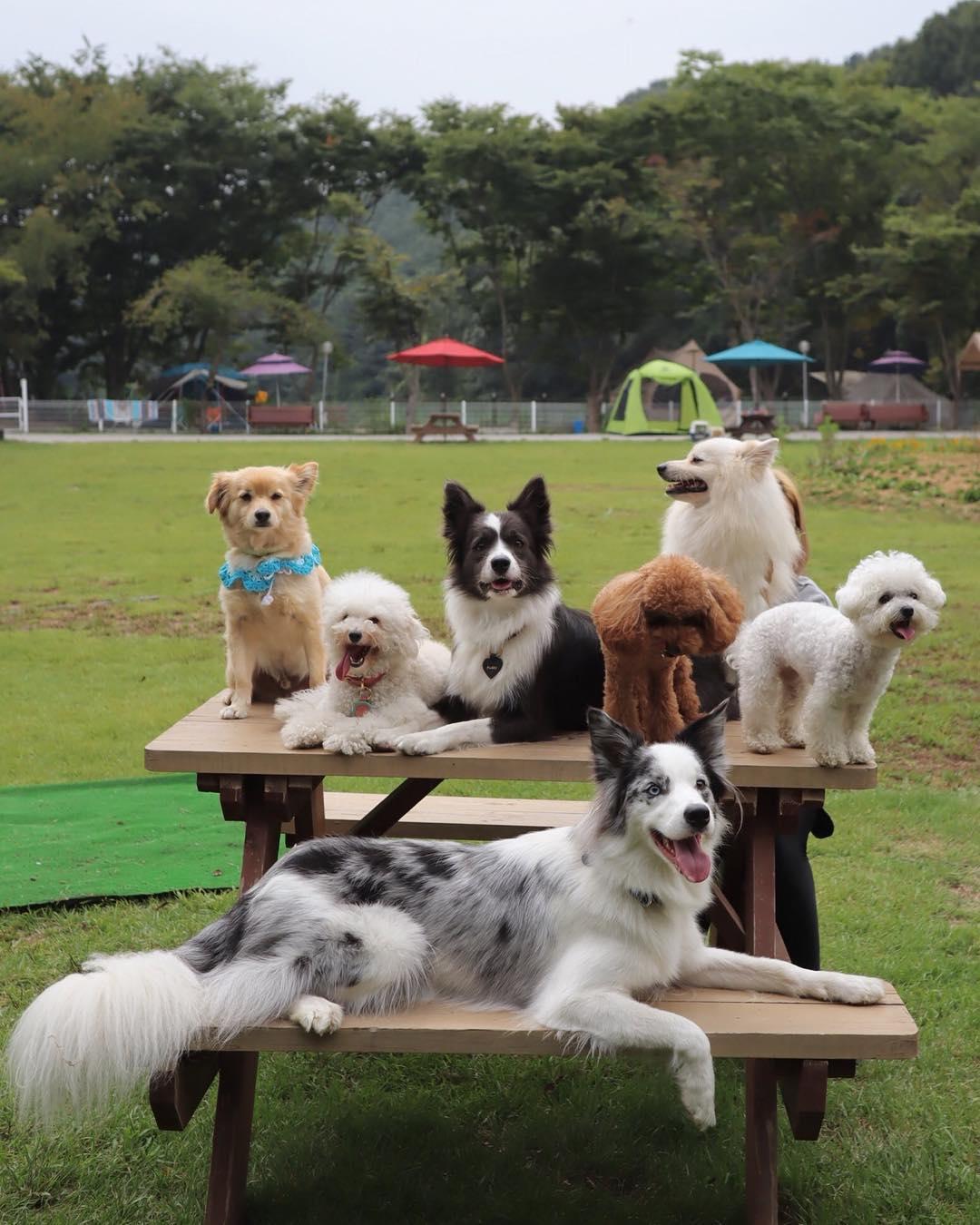 반려동물과 함께하는 가을 낭만캠핑